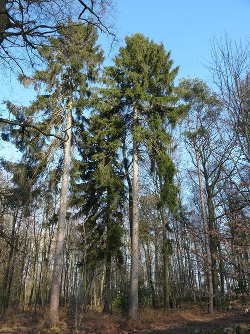 WEB Bomen in de Natuur Mechelen NL Maart 2015