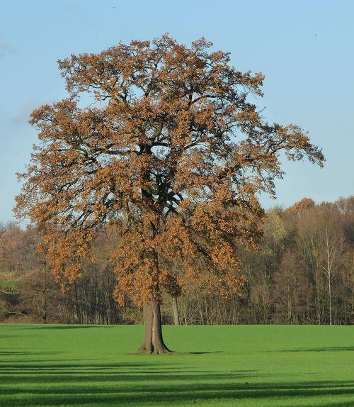 WEB Bomen in de Natuur Voerendaal Eik Nov 2015