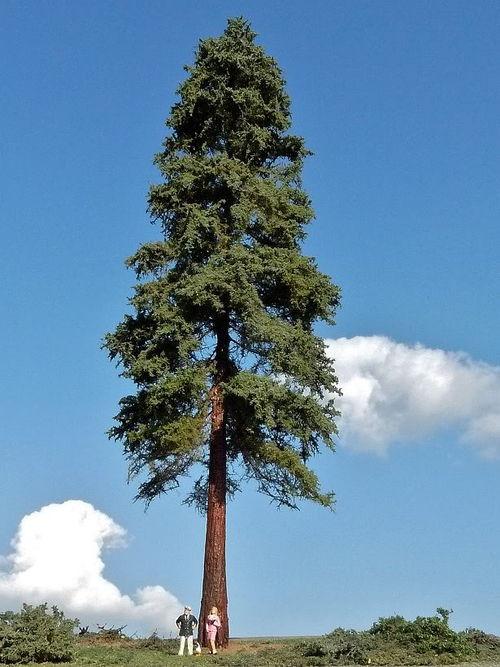 WEB Speciale Bomen H0-0 35 cm