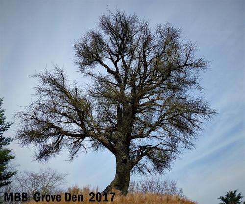 MBB Grove Den Speciale Boom Eik Winter